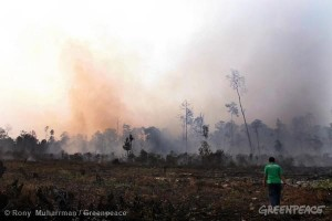 Haze from the ongoing burning of the peatland forest in Teluk Meranti village, Pelalawan, Riau.